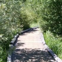 Taylor Creek Nature Walk 2